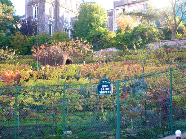 wineyard paris sightseeing
